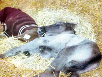 Orphaned set of very ill twin foals Sonja nurse back to health and raised