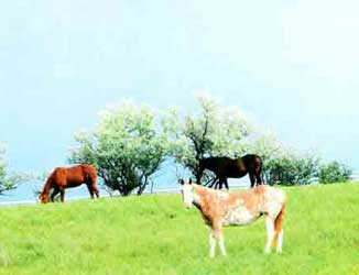 Fresh, Green Pastures for Horses