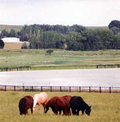 Lush Pastures for Horses to Graze
