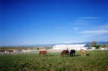 Pasture horses with indoor arena and the Rocky Mountains in the background